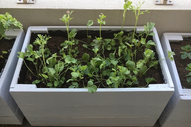 concrete planter boxes